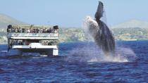 Los Cabos Whale Watching Cruise Including Breakfast, Los Cabos