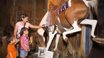 The Buckhorn Saloon & Museum and Texas Ranger Museum, San Antonio, Attraction Tickets