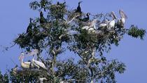 Countryside & Bird sanctuary Bike Tour, Siem Reap, Bike & Mountain Bike Tours