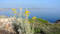 Discover the Camomile Route in the North Coast of Menorca with a Botanial Expert, Menorca, Cultural ...