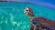 St John Snorkel Tour aboard New Horizons and Breakaway Charters, St Thomas, Snorkeling