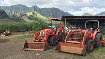 Farm-to-Table Tour at Kahumana Organic Farm & Cafe, Oahu, Food Tours