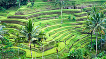 Private Ubud Full-Day Tour, Ubud, Full-day Tours