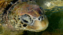 Cayman Turtle Farm Tour, Cayman Islands