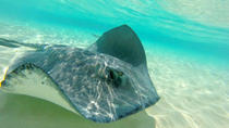 Stingray City and Snorkel Tour in Grand Cayman, Cayman Islands, Snorkeling