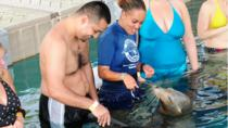 Blue Lagoon Sea Lion Encounter from Nassau, Nassau, Day Trips