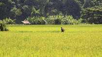 Live Like a Local: Rice Farmer for a Day from Chiang Mai, Chiang Mai, Cultural Tours