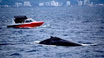 Fast Fun and Exciting Whale Watching from Mooloolaba, Noosa & Sunshine Coast, Dolphin & Whale...