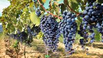 Half-day Wine Tour in the Tuscan's Hills from Pisa, Pisa, Day Trips