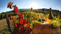 Vinci Chianti Wine and Aperitivo Small Group Tour from Pisa, Pisa, Wine Tasting & Winery Tours