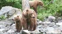 Alaska Bear Viewing Tour to Wolverine Creek from Soldotna, Alaska, Soldotna, Cultural Tours