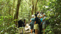 Full Day Tour to The Izalco, The Santa Ana and Cerro Verde Volcano, Lake Coatepeque, Joya de ...