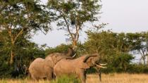 5-Day Pearl of Africa Chimps and Gorilla Trekking Safari, Kampala, Cultural Tours