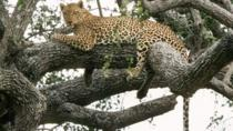 6-Day Murchison Falls, Chimp Trekking and Big Game Combo, Kampala, Cultural Tours