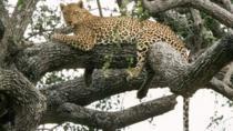 6-Day Murchison Falls, Chimp Trekking and Big Game Combo, Kampala, Cultural Tours