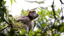 8-Day Murchison Falls, Chimp and Epic Gorilla Trekking Safari, Kampala, Cultural Tours