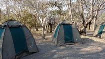 Chobe National Park Camping Safari From Victoria Falls (2 Days and 2 Nights), Victoria Falls,...