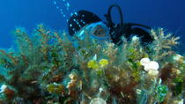 Discover diving with us, Split, Day Cruises