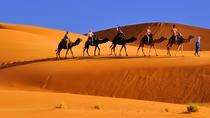 Marrakech Camel Ride, Marrakech, Nature & Wildlife