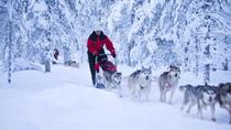 Lapland Husky Safari from Rovaniemi, Rovaniemi, Ski & Snow