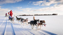 Lapland Husky Sled Ride from Yllas, Lapland, Ski & Snow