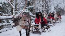 Lapland Northern Lights Experience by Reindeer Sled from Luosto, Lapland, Night Tours