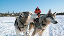 Lapland Snowmobile Safari to a Husky Farm from Rovaniemi Including Husky Sled Ride, Rovaniemi