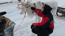 Reindeer Farm Visit and Sleigh Ride from Levi, Lapland, Day Trips