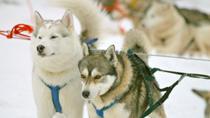 Snowmobile Safari to a Husky Farm from Luosto Including Husky Sled Ride, Finland, Ski & Snow