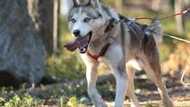 Summer Lapland Husky Hike with Transport from Rovaniemi, Rovaniemi, Nature & Wildlife