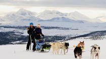 Lapland Husky Sled Safari from Tromso, Tromso