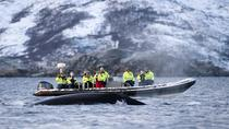 RIB Whale Watching Cruise from Tromso, Tromso, Dolphin & Whale Watching