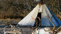 Sami Culture and Reindeer Tour with Optional Transport from Tromso, Tromso, Cultural Tours