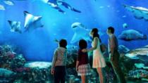 SEA Aquarium Admission E-ticket, Singapore, Attraction Tickets