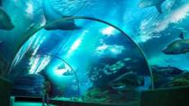 SEA LIFE Bangkok Ocean World Admission, Bangkok, Theme Park Tickets & Tours