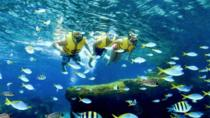 Skip the Line: Adventure Cove Waterpark Admission E-ticket