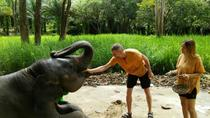 Elephant Care and Feeding, Phuket, 4WD, ATV & Off-Road Tours