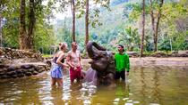 Elephant Care, Feeding, ATV Riding, Phuket, 4WD, ATV & Off-Road Tours