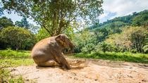 Elephant Care, Feeding, ATV Riding and White Water Rafting, Phuket, 4WD, ATV & Off-Road Tours