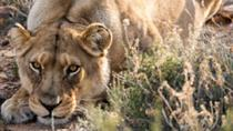 SAFARI IN FAIRY GLEN GAME RESERVE, Cape Town, Cultural Tours