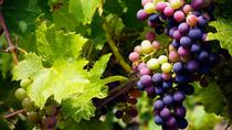 Through The Grapevine Winery Tour 7hrs - From Larnaca, Larnaca, Wine Tasting & Winery Tours