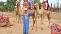 Camel ride and barbecue in Agadir, Agadir, Nature & Wildlife