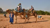 Camel ride at the sunset in Agadir, Agadir, Nature & Wildlife