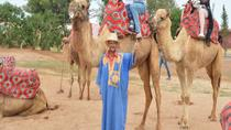 Camel Riding in Agadir, Agadir, Nature & Wildlife