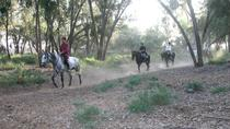 Horse riding in Agadir, Agadir, Day Trips