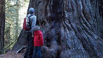 Hiking In Sausalito in Marin County, San Francisco, Hiking & Camping