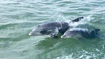 Historical Wildlife & Dolphin Cruise South Padre Island, South Padre Island, Cultural Tours