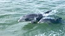 Private Historical Wildlife & Dolphin Cruise South Padre Island, South Padre Island, Cultural Tours