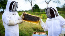 Cayman Honey Beekeeping Adventure, Cayman Islands, 4WD, ATV & Off-Road Tours