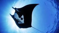 Night Manta Experience, Big Island of Hawaii, Snorkeling